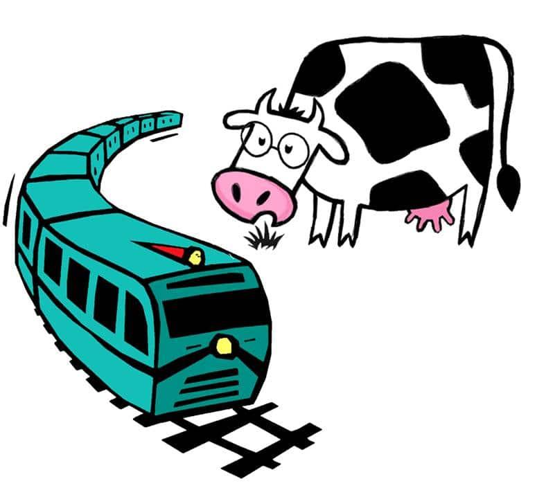 Vache voit passer un train